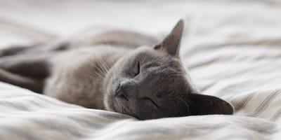 Preferisci un gatto calmo o attivo?