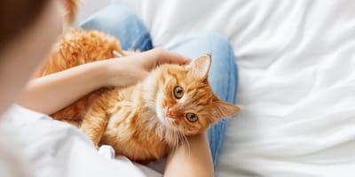 Quale sarebbe la relazione ideale con il tuo gatto?