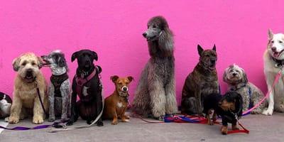 Fai il test: quali razze di cani fanno al caso tuo?