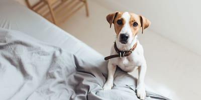 Per quanto tempo al giorno resterà solo il tuo cane?
