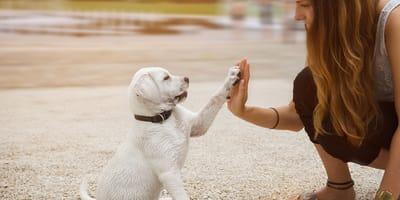 Qual è il tuo livello di conoscenza dei cani?