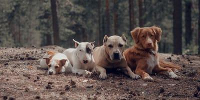 Qual è la tua taglia ideale per un cane?